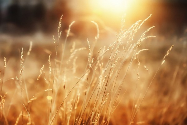 مزمور 16 – مقاطع مشجعة
