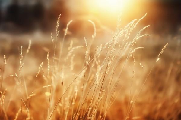 دينامكية الزرع والحصاد في الملكوت – مقاطع مشجعة