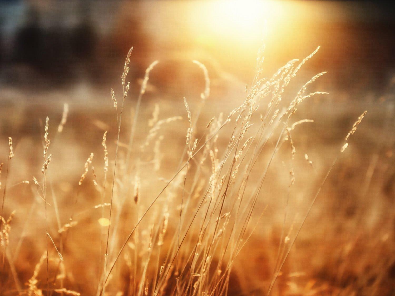 دينامكية الزرع والحصاد في الملكوت